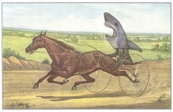 How to Always Win a Horse Race