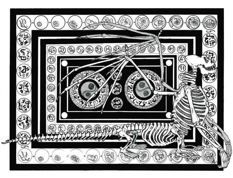 skeleton diagramsm